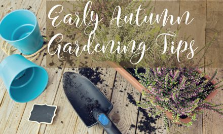 Early Autumn Gardening Jobs